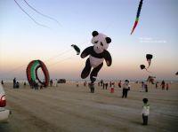 Kite_Festival_in_Kuwait